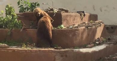 orsi zoo