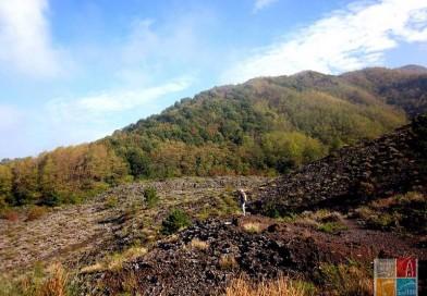Festa dell'albero, 1300 nuove piante per il Vesuvio
