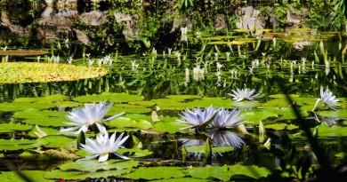 Giardini-la-Mortella