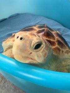 SZN - Liberazione tartarughe 03