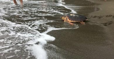 SZN - Liberazione tartarughe 04