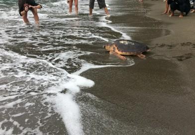 """""""Un Tuffo nel Blu"""", è Ischia l'isola delle tartarughe"""