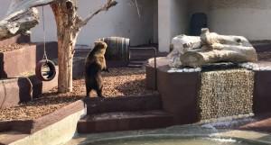 orsi zoo napoli 3