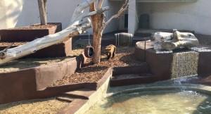 orsi zoo napoli