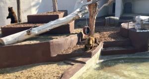 orsi zoo napoli 4