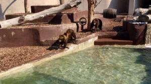 orsi zoo napoli1