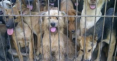 rapimenti-di-cani