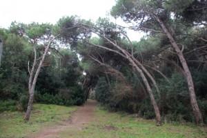 foresta di Castelvolturno