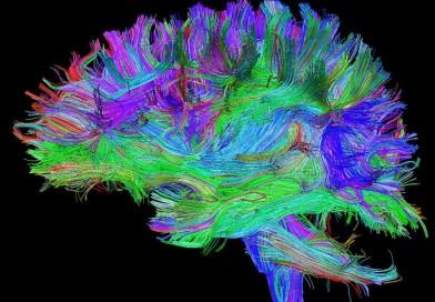 Da Napoli alla scoperta della mappa dei pensieri del cervello