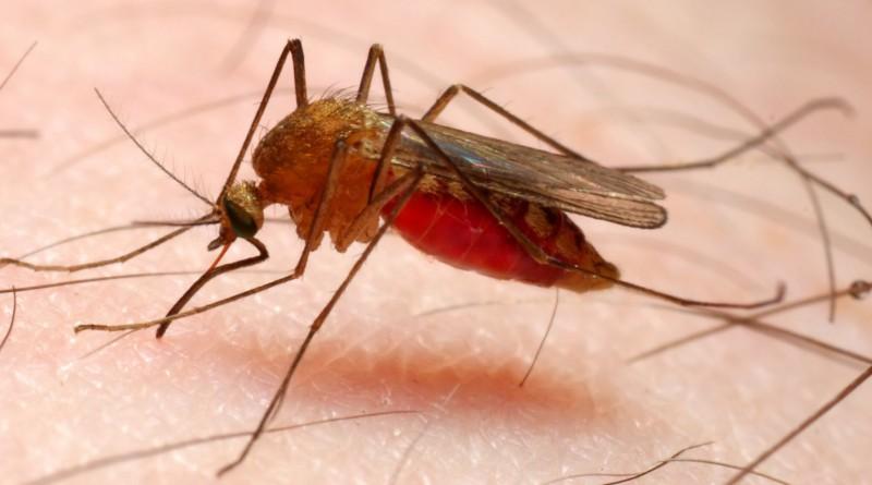 malaria-brescia