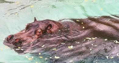 Carola fa il bagno allo zoo di napoli