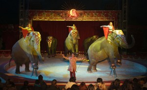 I maestosi elefanti di Jones Togni
