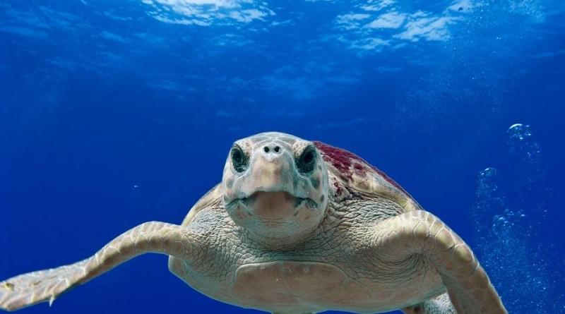 Tartarughe Marine - Pesca indiscriminata, occupazione delle coste e inquinamento hanno portato questi animali sull'orlo dell'estinzione