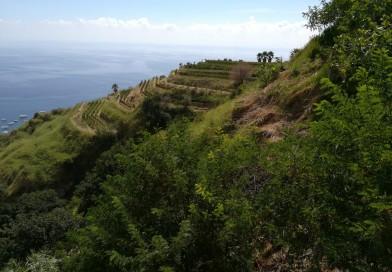 """Sull'isola d'Ischia, la """"festa della vendemmia"""" nella vigna dei mille anni"""