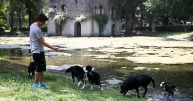 Cani in Mdo 4