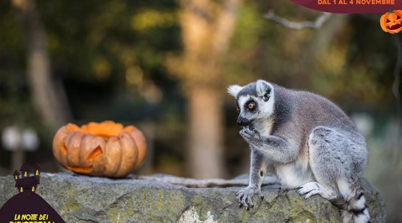zoo di napoli halloween