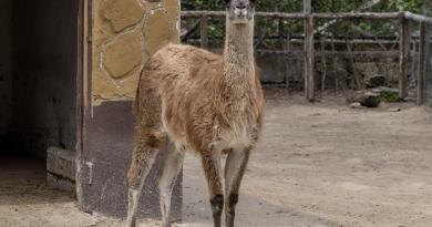 Zoo animali