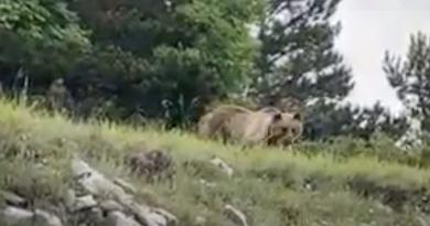 Un orso sulla strada verso l'Aremogna