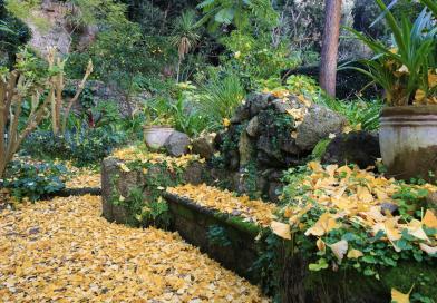 Ischia, alla Mortella un autunno di grandi eventi